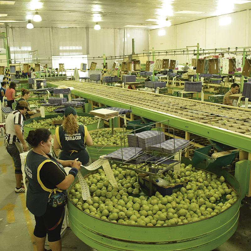 Internos-el-valle-que-no-es-empaque-de-peras-manzanas