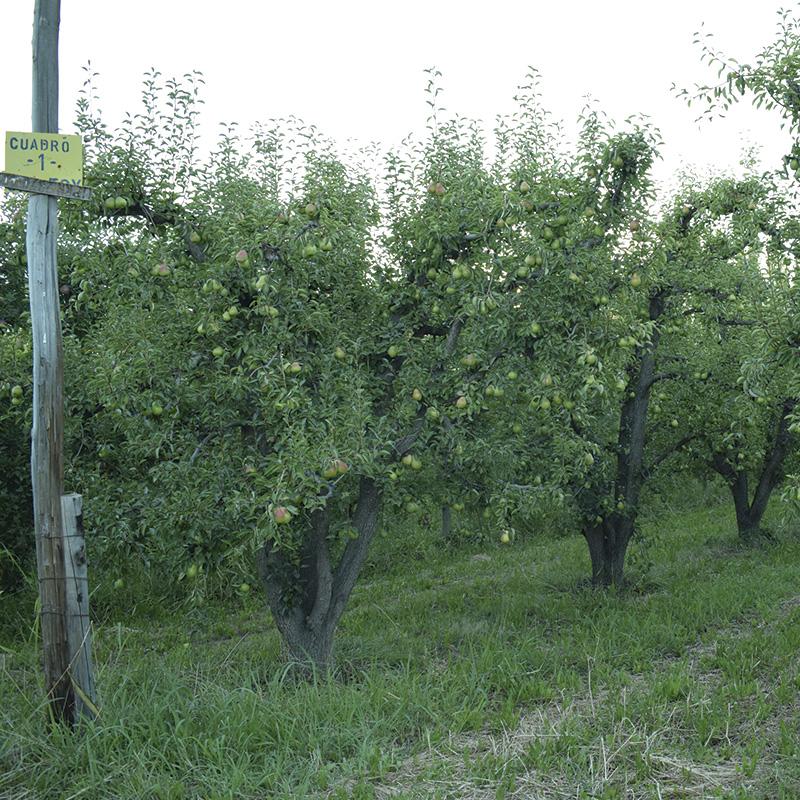 Internos-el-valle-que-no-es-monte-tradicional-manzanos