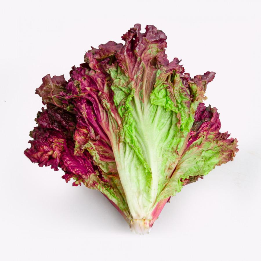 lechuga-morada-1-planta